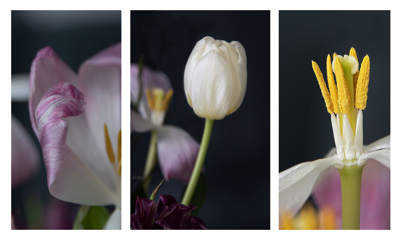 Gabi Bauch - Tulpen